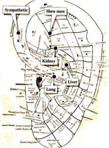 Acupuncture Dublin ear points